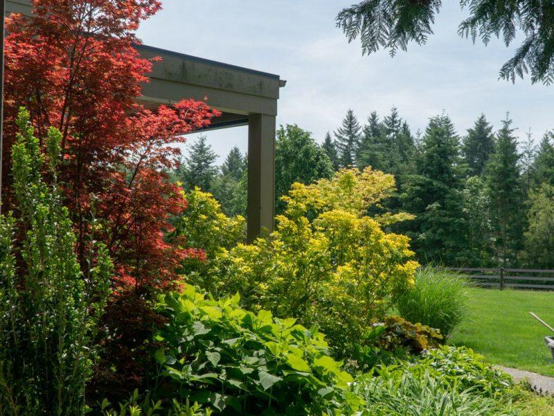 Garden 5 mixed border