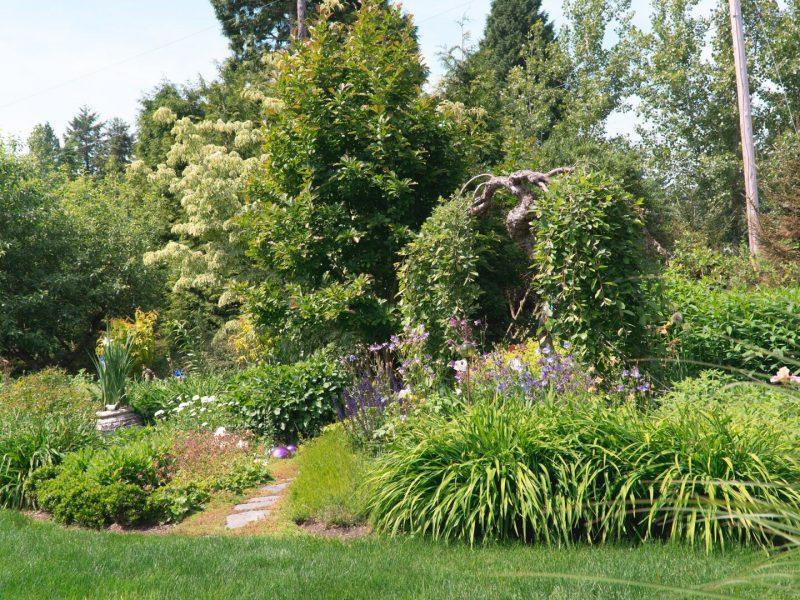 Garden 5 perennial bed