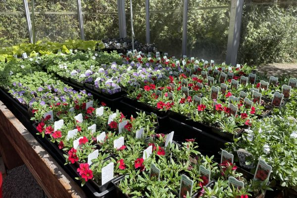 Greenhouse_plants2
