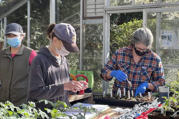 Greenhouse_workers